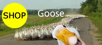 gooseショッピングサイトオープンソース製品の販売